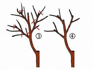 Comment Tailler Un Pommier : caribfruits la taille des arbres fruitiers fiches ~ Dode.kayakingforconservation.com Idées de Décoration