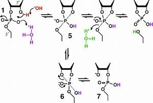 Mechanism Of Rna Cleavage Under Mildly Acidic Conditions