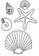 Coloring Pages Seashells Seashell Print Popular sketch template