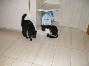 Kleine Schwarze Würmer : kleines katzenp rchen in wohnung zur ckgelassen bitte ~ Lizthompson.info Haus und Dekorationen