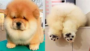THE CUTEST DOG BREEDS In The World - YouTube