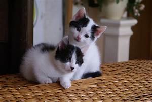 Laver Un Chaton : les 15 premiers jours du chaton la maison ~ Nature-et-papiers.com Idées de Décoration