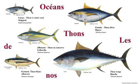 comment cuisiner le marlin cuisine en folie tartare de thon albacore mangue et