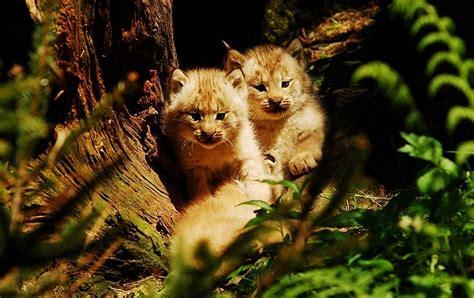 stunning animal photography blog   animals