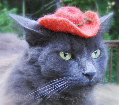 Cowboy Cat Hat Chestnut Brown