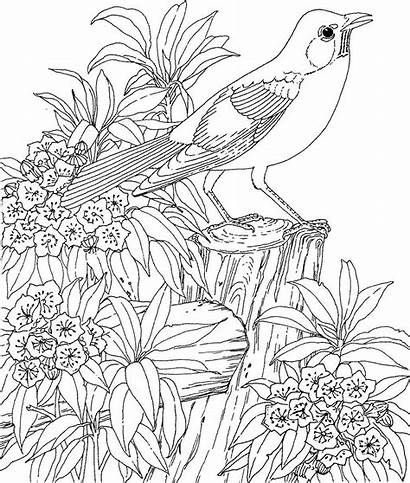 Coloring Pages Adults Nature Colouring Flowers Animal