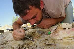 Badge Télépéage Vinci Installation : une quipe de recherche de poitiers d couvre un nouveau dinosaure pourvu d un syst me dentaire ~ Medecine-chirurgie-esthetiques.com Avis de Voitures