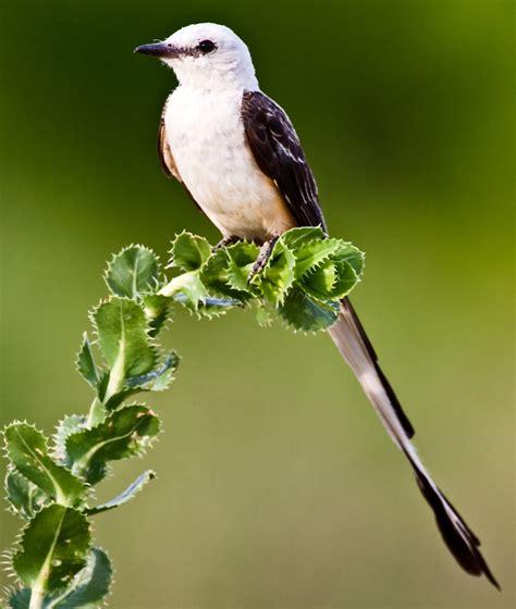 this i believe birds make life better dallas zoohoo