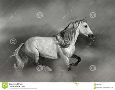 andalusian horse preview