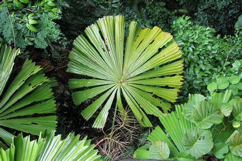Paper Flower Leaves Tutorial