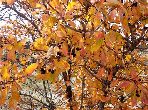 Autumn Leaves Picture | Free Photograph | Photos Public Domain