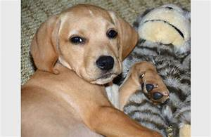 Cute Dog Mixed Breeds