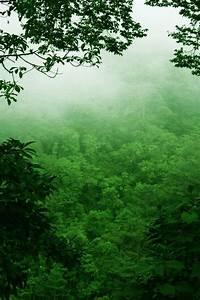 Costa Rican rainforest | Breathe! | Pinterest