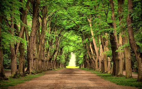 Road Green Trees Beautiful Landscape Nature Road Green