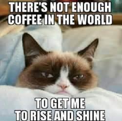 cat memes best grumpy cat memes that you ll see