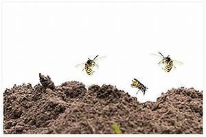 Wespennest Im Boden : wespennest was tun wespennest direkt beim kinderzimmer was tun wespennest im rolladenkasten ~ Whattoseeinmadrid.com Haus und Dekorationen