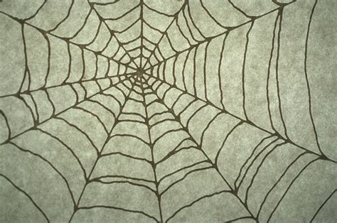 spider web drawing with spider spider web drawing digital by barbara