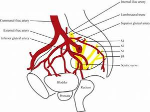 A Schematic Overview Shows The Anatomy And Position Of The