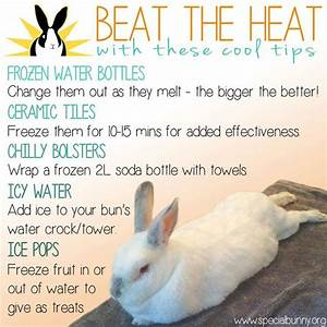 Saw this shared on Facebook. How to keep bunnies cool in ...