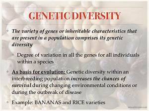 Biodiversity  Definition  Levels And Threats