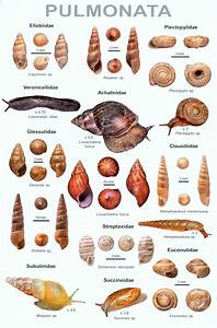 An Illustrated Guide To The Land Snails Of Nepal