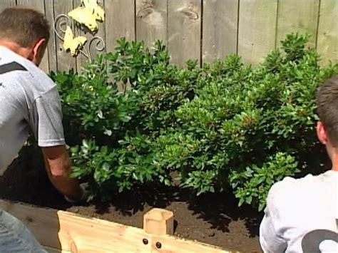 easy  grow plants  put   ground  spring