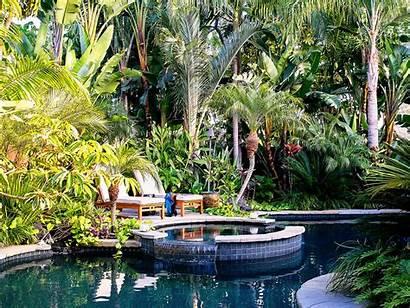 Tropical Plants Garden Sunset Pool Lagoon Hawaiian