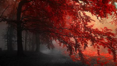 fall mist red nature wallpapers hd desktop  mobile
