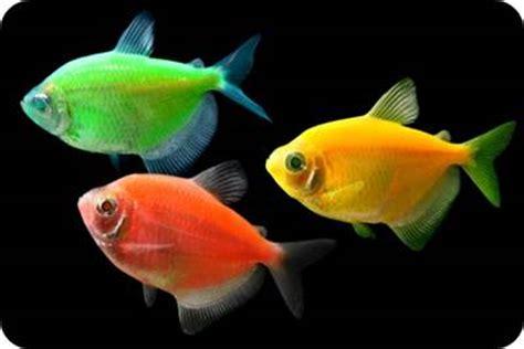 glofish castle ornament for aquarium large aquarium decor ornaments pet supplies