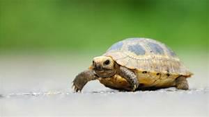 Cute Turtle Wallpaper - WallpaperSafari