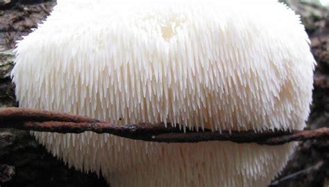 fun fungus   mushrooms rock highvibe