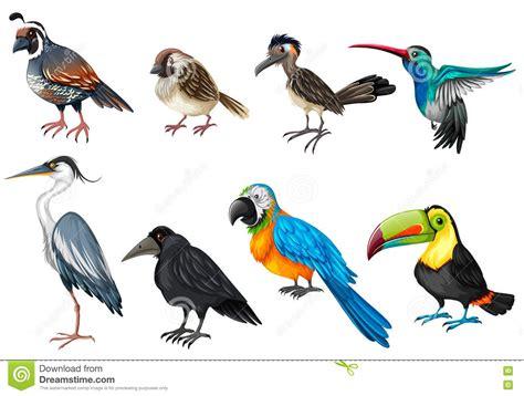 different types of wild birds vector illustration