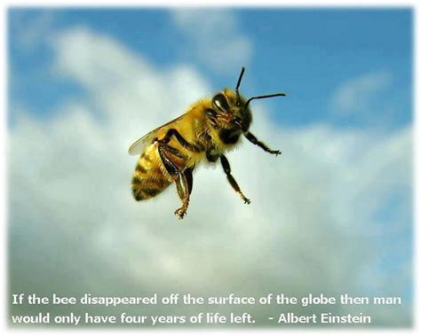 Bee Quotes Einstein Image Quotes At Hippoquotescom
