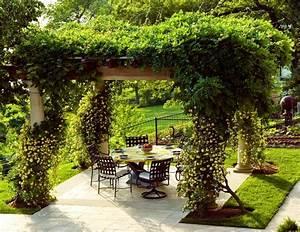 Pergola Mit Wein Bepflanzen : piante rampicanti piante da giardino caratteristiche delle piante rampicanti ~ Eleganceandgraceweddings.com Haus und Dekorationen