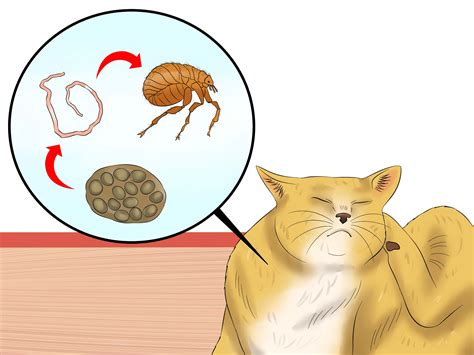 prevent tapeworms  cats  steps  pictures