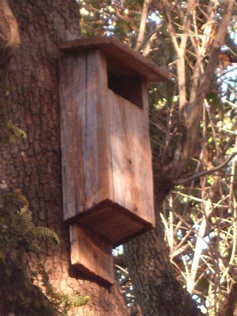 bird house plans kids  build
