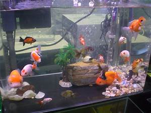 Goldfish Types For Aquariums - www.proteckmachinery.com
