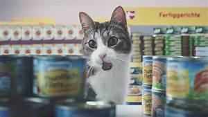 Katzen In Mietwohnung 2016 : unruly nettos katzen einkaufsbummel ist das meistgeteilte ~ Lizthompson.info Haus und Dekorationen