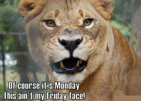 Lions Memes - welcome to memespp com