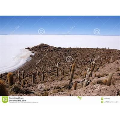 Isla Del Pescado Salar De Uyuni Bolivia Stock Photos