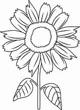 Sunflower Coloring Clipart Sunflowers Flower Pages Drawing Print Clip Unlabeled Diagram Cliparts Colornimbus Sun Clipartfest Colors Printable Library Simple Getdrawings sketch template