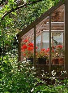 Winter Greenhouse Geraniums