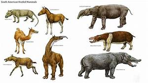 South American Hoofed Mammals | Paleo Gaia | Pinterest ...
