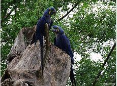 Roteiro de 3 dias no Pantanal MS e dicas para fazer os principais passeios  Viagens Possíveis 5e7ce39b49