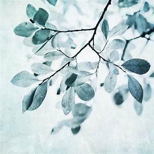 Leaves In Dusty Blue Photograph by Priska Wettstein