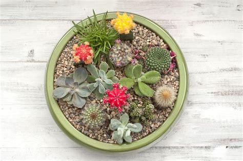 Composition Plantes Grasses Exterieur Cactus Et Plantes Grasses Ext 233 Rieur Pour Un Jardin Facile 224 D 233 Corer