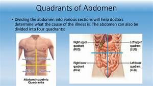 Pictures  Abdomen Region With Organ