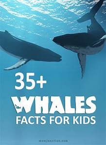 Chinese Gender Chart 2016 Due Date Interesting Facts And Information About Whales For Kids