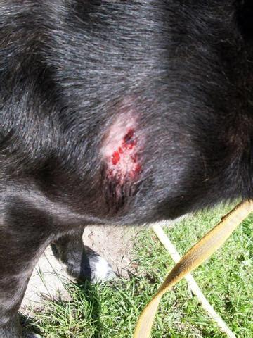 hat mein hund eine ernste hautkrankheit haut tierarzt