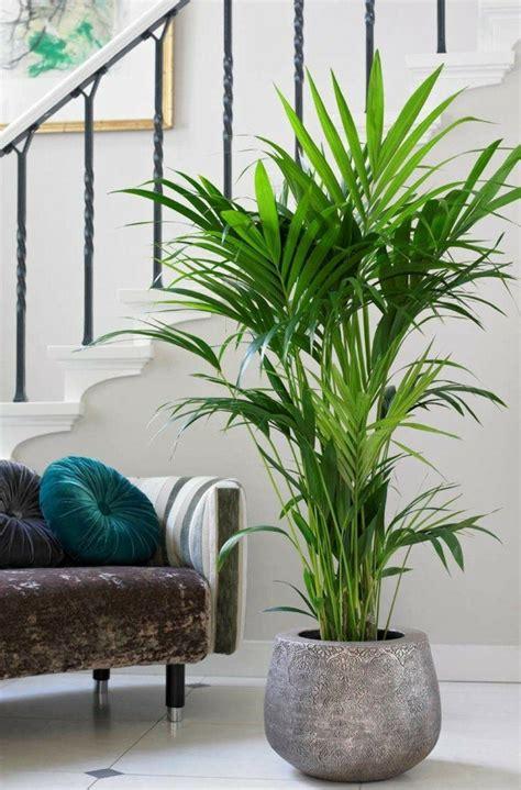 palmier en pot interieur palmier d int 233 rieur esp 232 ces propri 233 t 233 s et conseils d entretien